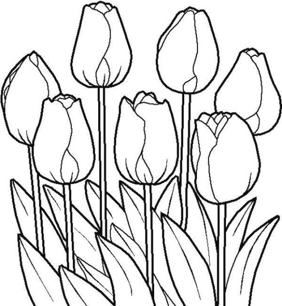 Tulip coloring #13, Download drawings