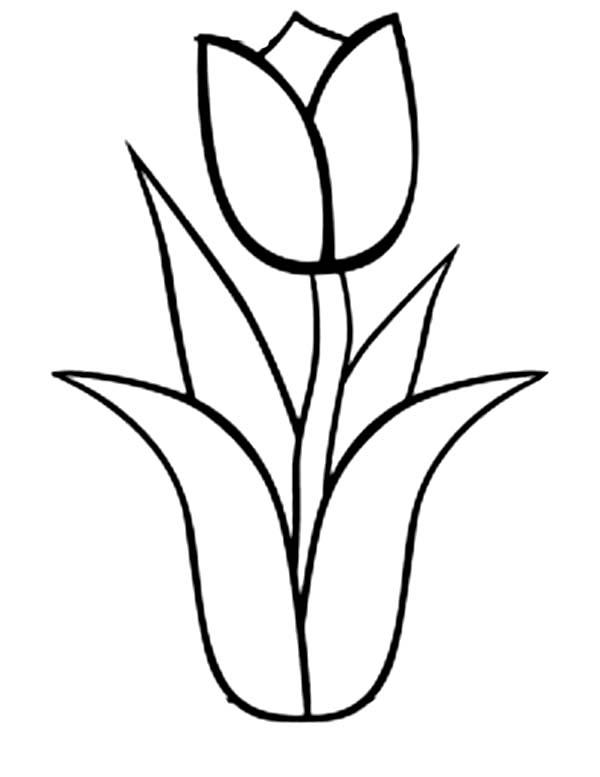Tulip coloring #7, Download drawings