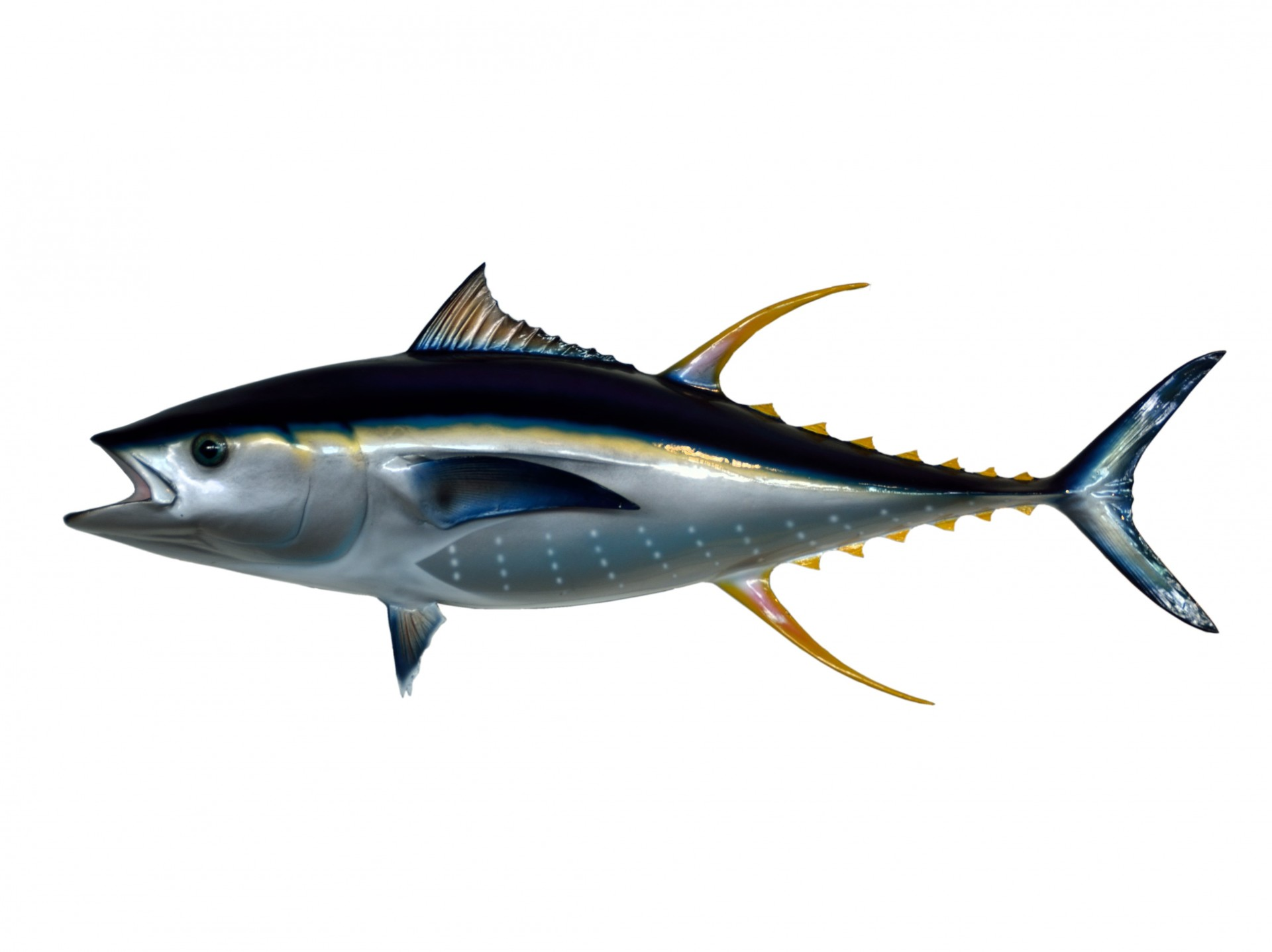 Tuna clipart #1, Download drawings