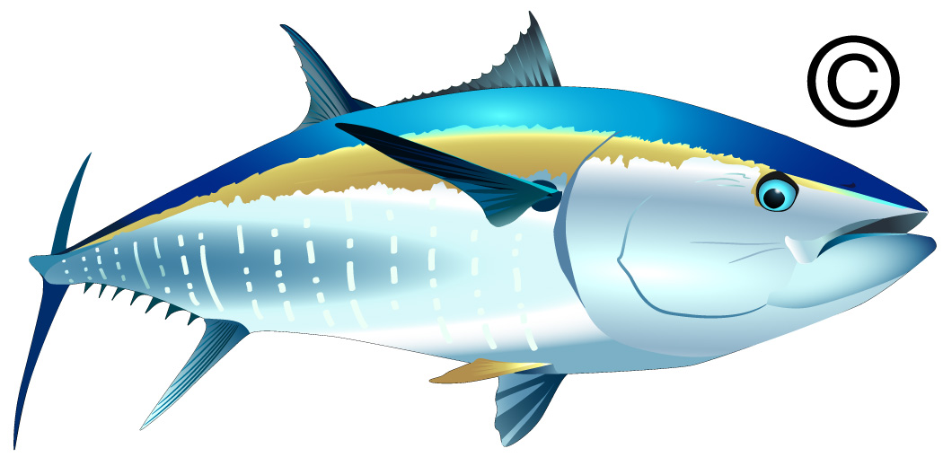 Tuna clipart #16, Download drawings