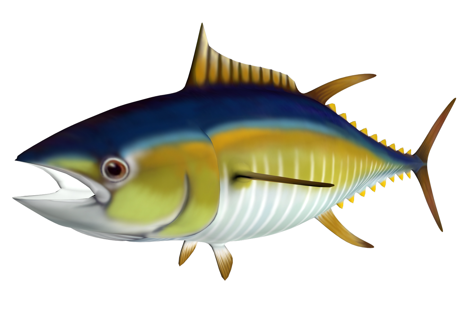 Tuna clipart #5, Download drawings