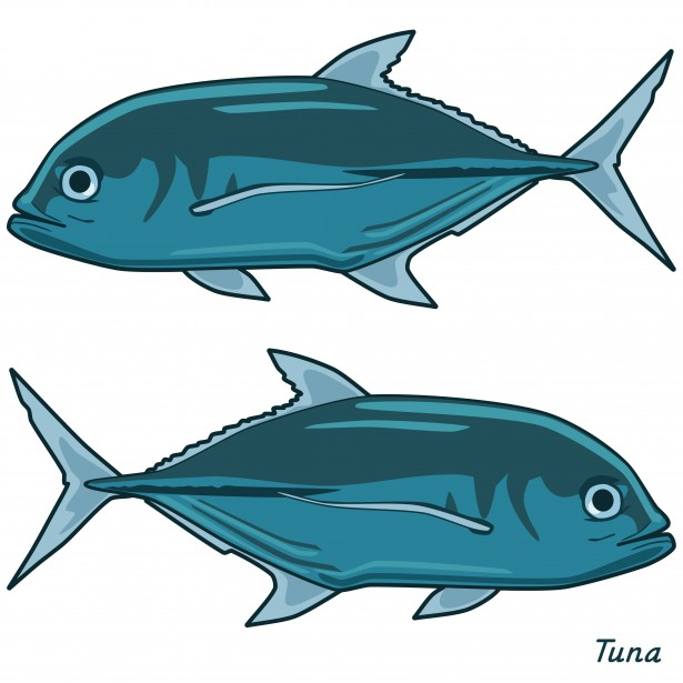 Tuna clipart #15, Download drawings