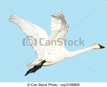Tundra Swan clipart #10, Download drawings