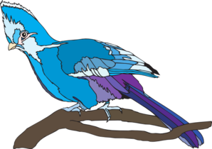 Turaco clipart #1, Download drawings