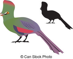 Turaco clipart #5, Download drawings