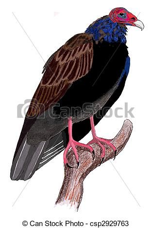 Turkey Vulture clipart #4, Download drawings
