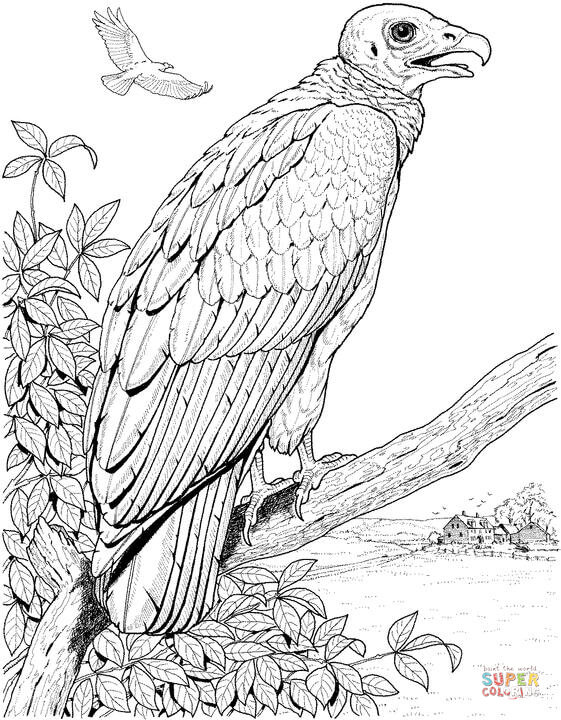Turkey Vulture coloring #9, Download drawings