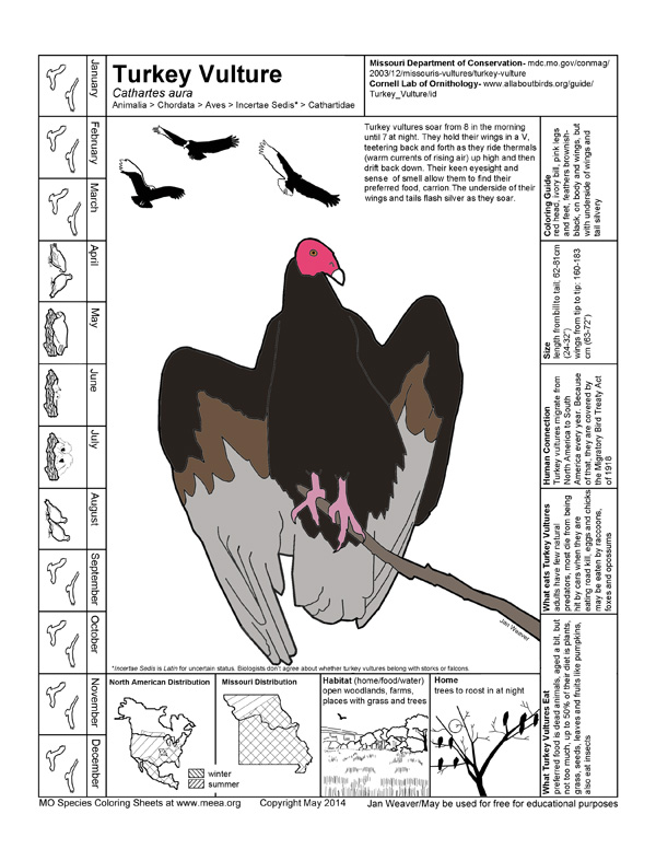Turkey Vulture coloring #5, Download drawings