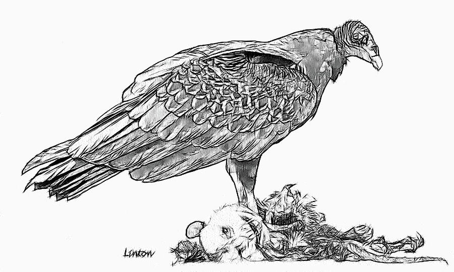 Turkey Vulture coloring #17, Download drawings