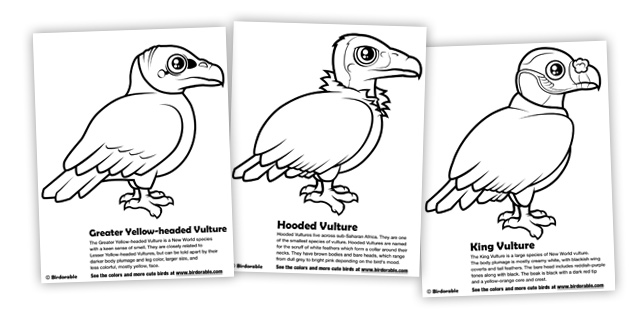 Turkey Vulture coloring #8, Download drawings