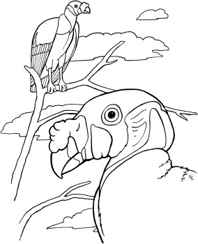 Turkey Vulture coloring #19, Download drawings