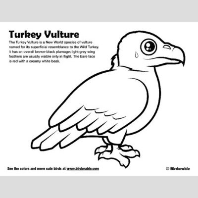 Turkey Vulture coloring #1, Download drawings