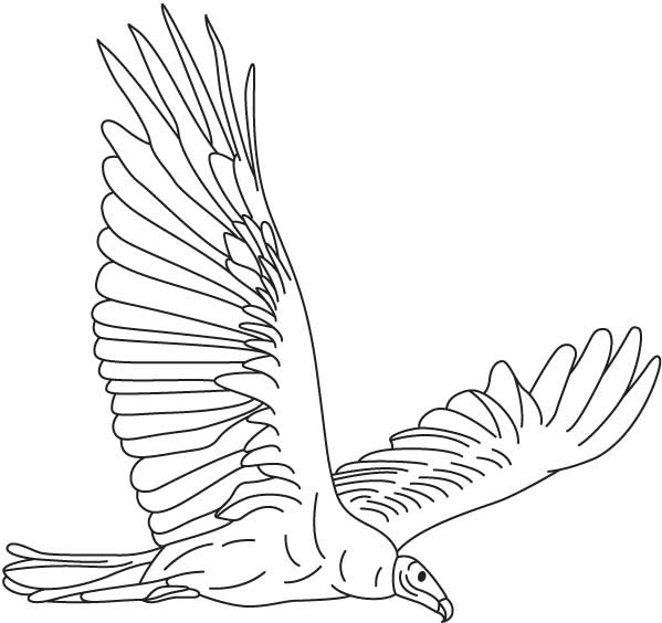 Turkey Vulture coloring #20, Download drawings