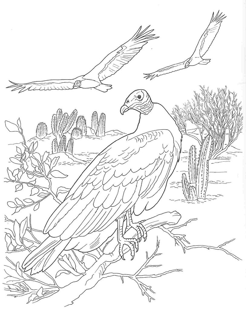 Turkey Vulture coloring #12, Download drawings