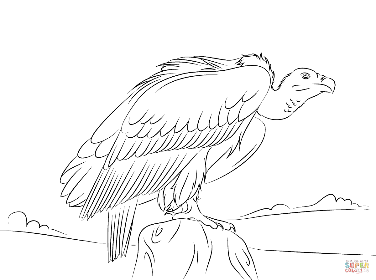 Turkey Vulture coloring #11, Download drawings