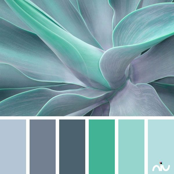Turquoise coloring #2, Download drawings