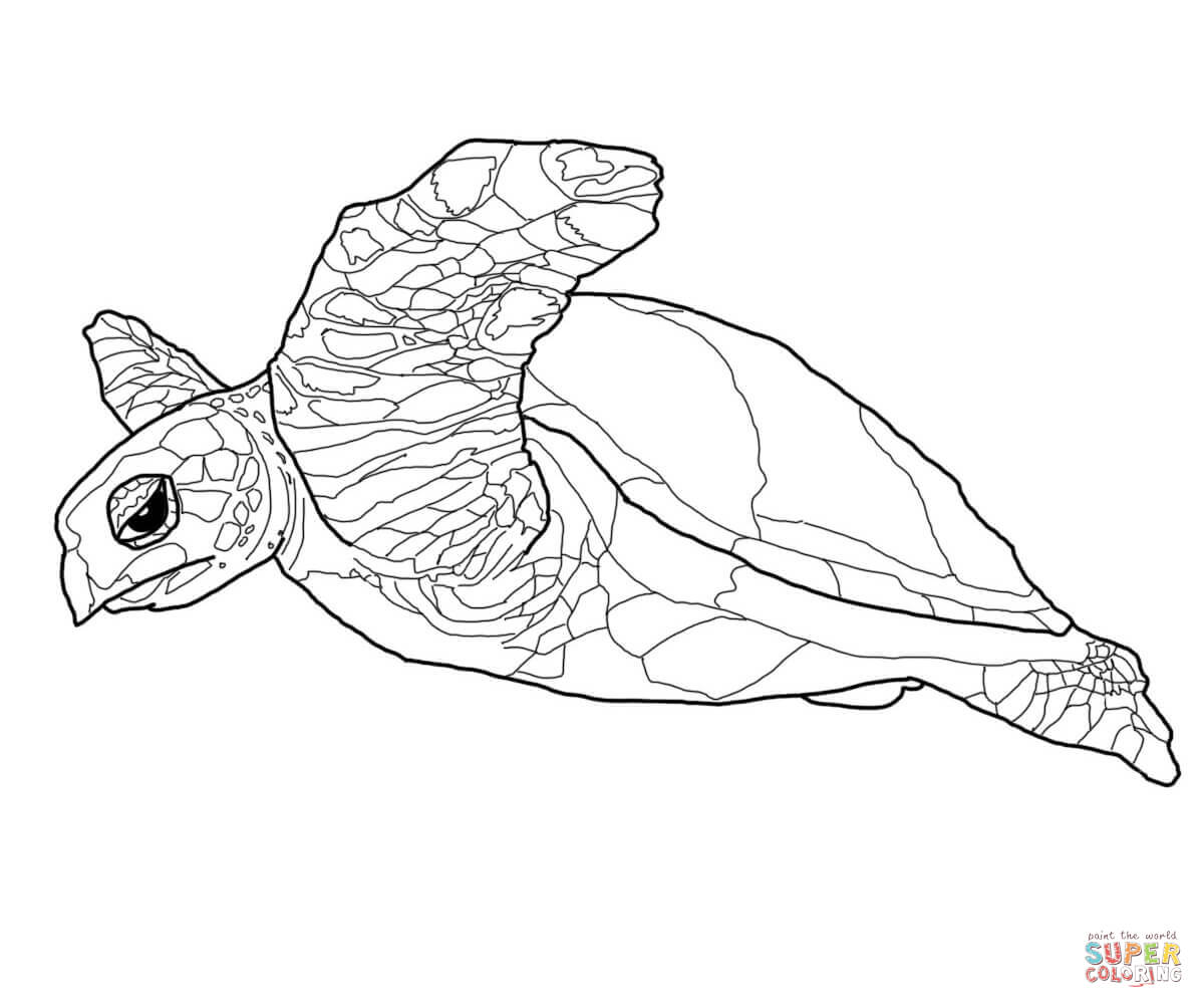 Turtle coloring #9, Download drawings