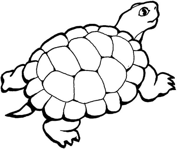 Turtle coloring #5, Download drawings