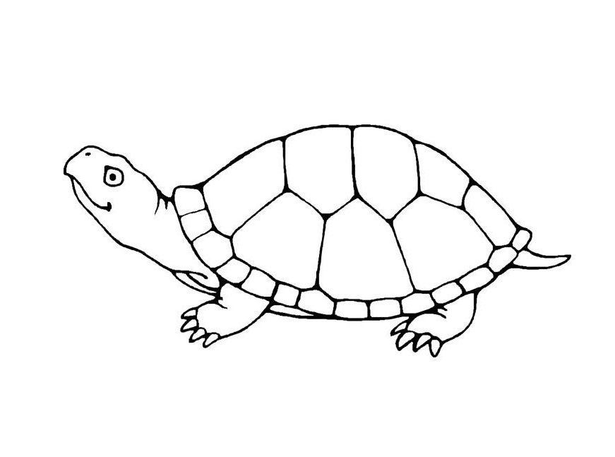 Turtle coloring #17, Download drawings