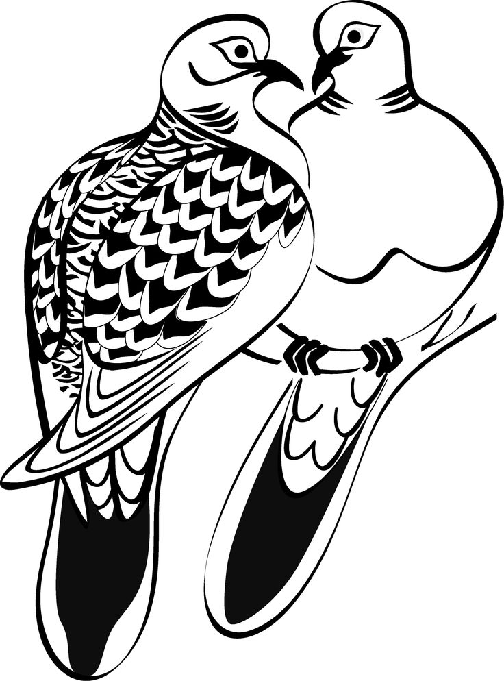 Turtle Dove clipart #3, Download drawings