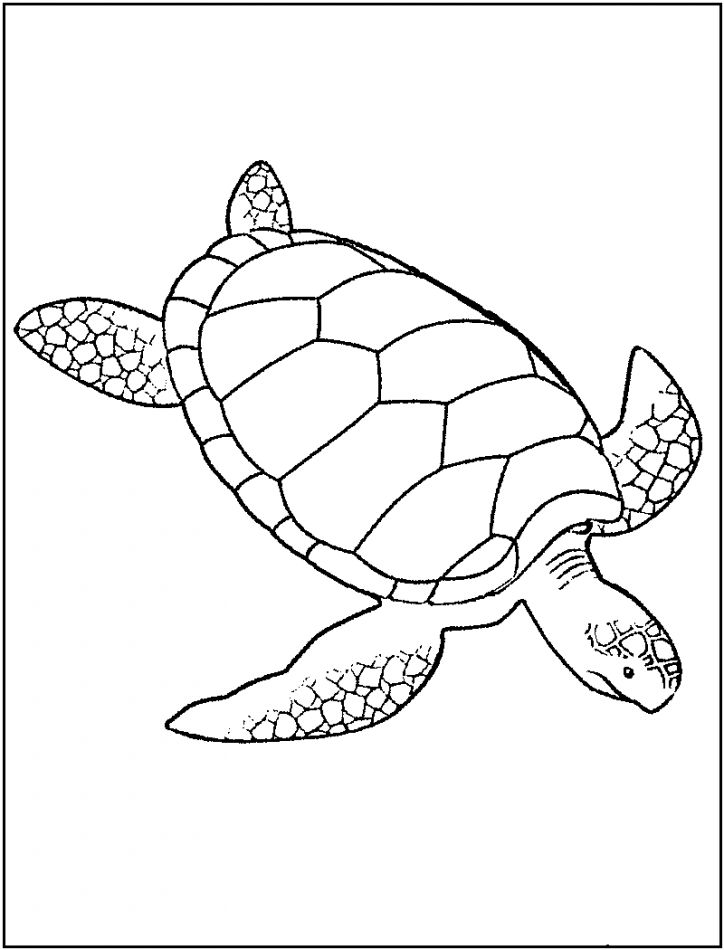 Turtle Monk coloring #2, Download drawings