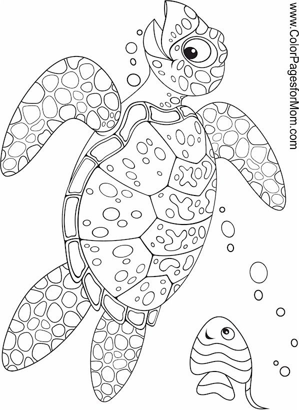Turtle Monk coloring #18, Download drawings