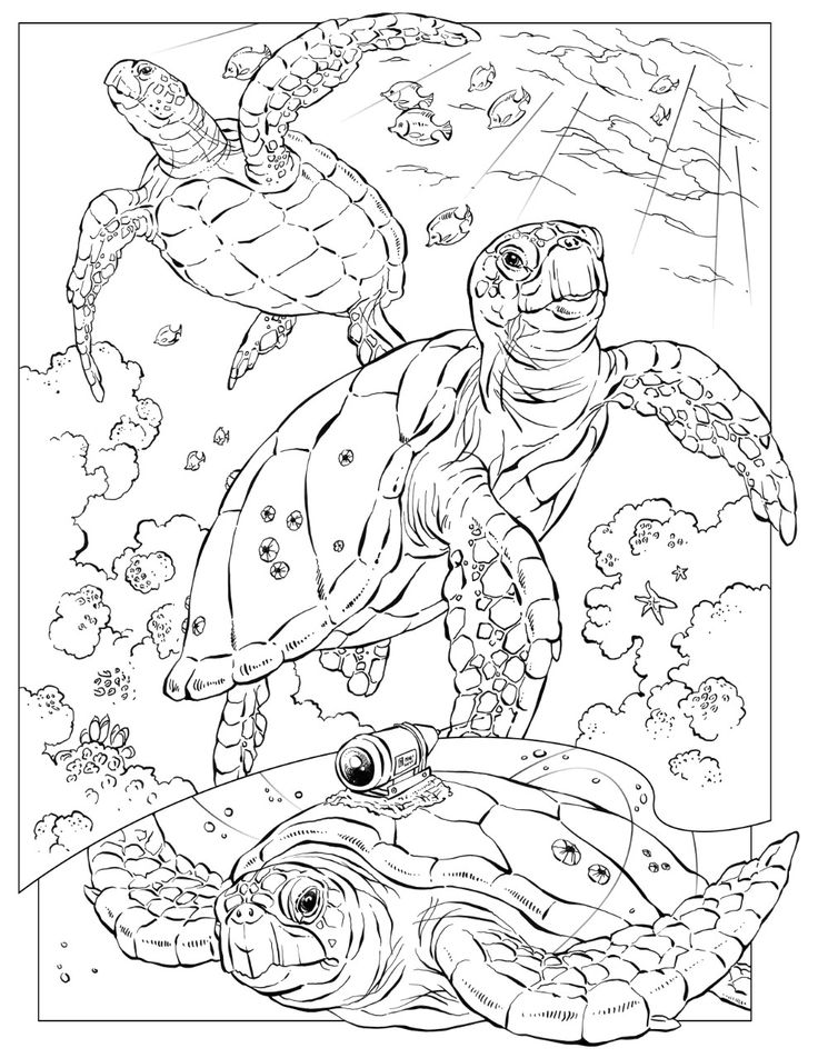 Turtle Monk coloring #14, Download drawings