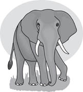 Tusk clipart #3, Download drawings