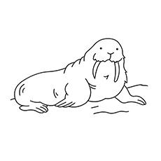 Tusk coloring #10, Download drawings
