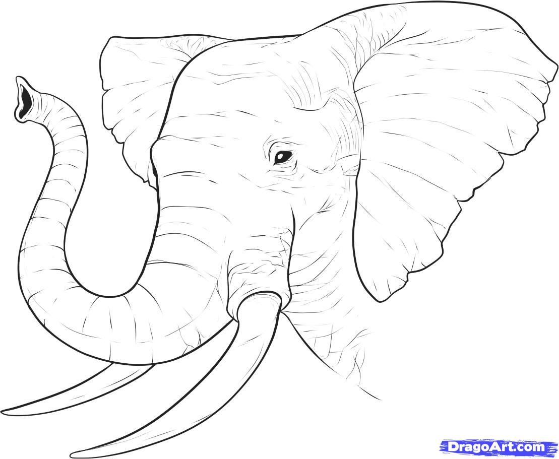 Tusk coloring #12, Download drawings