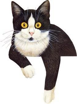 Tuxedo Cat clipart #9, Download drawings