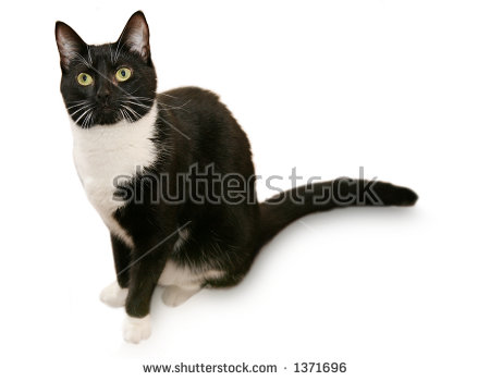 Tuxedo Cat clipart #3, Download drawings