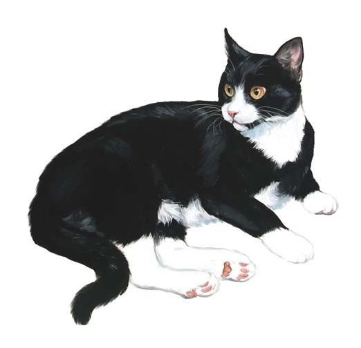 Tuxedo Cat clipart #19, Download drawings