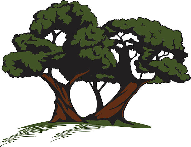 Twisted Tree clipart #11, Download drawings