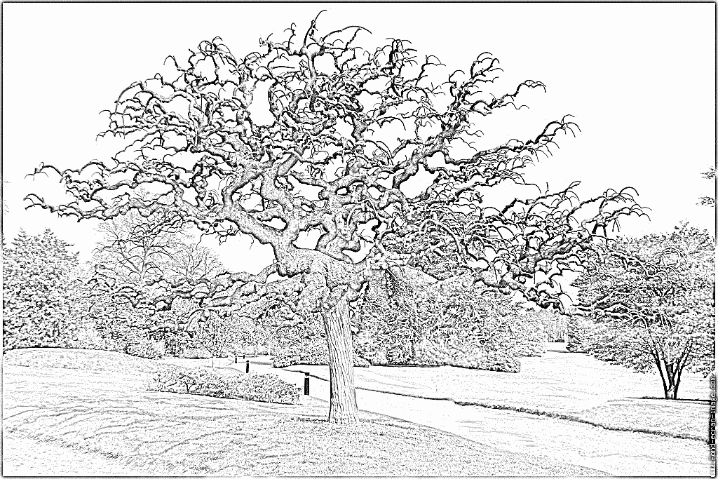 Twisted Tree coloring #17, Download drawings