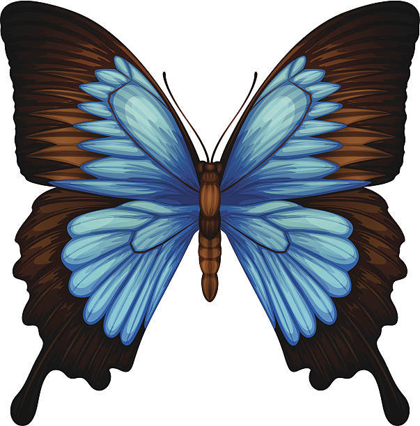 Ulysses Butterfly clipart #1, Download drawings