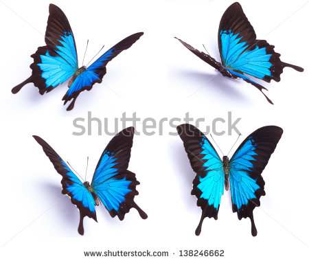 Ulysses Butterfly clipart #8, Download drawings