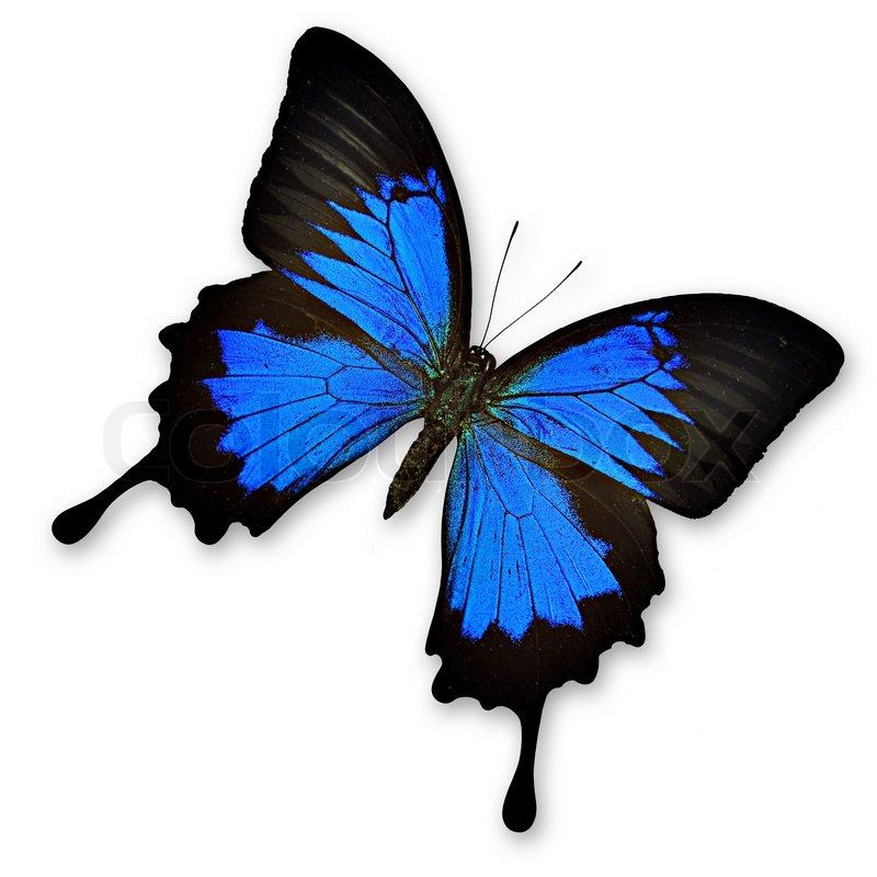 Ulysses Butterfly clipart #20, Download drawings