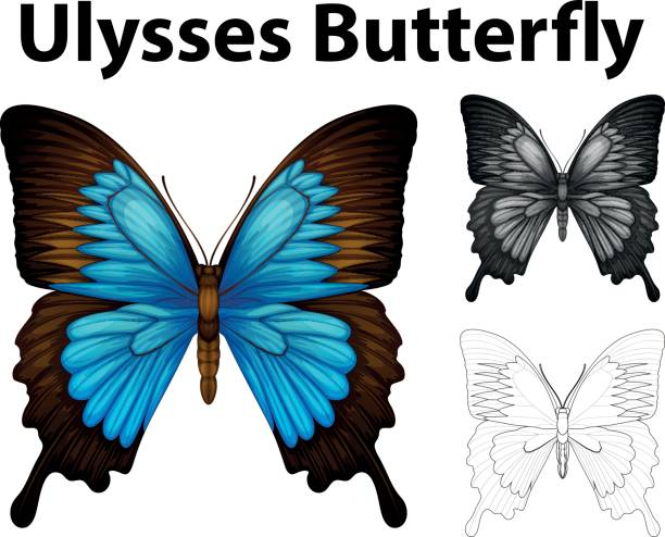 Ulysses Butterfly clipart #7, Download drawings