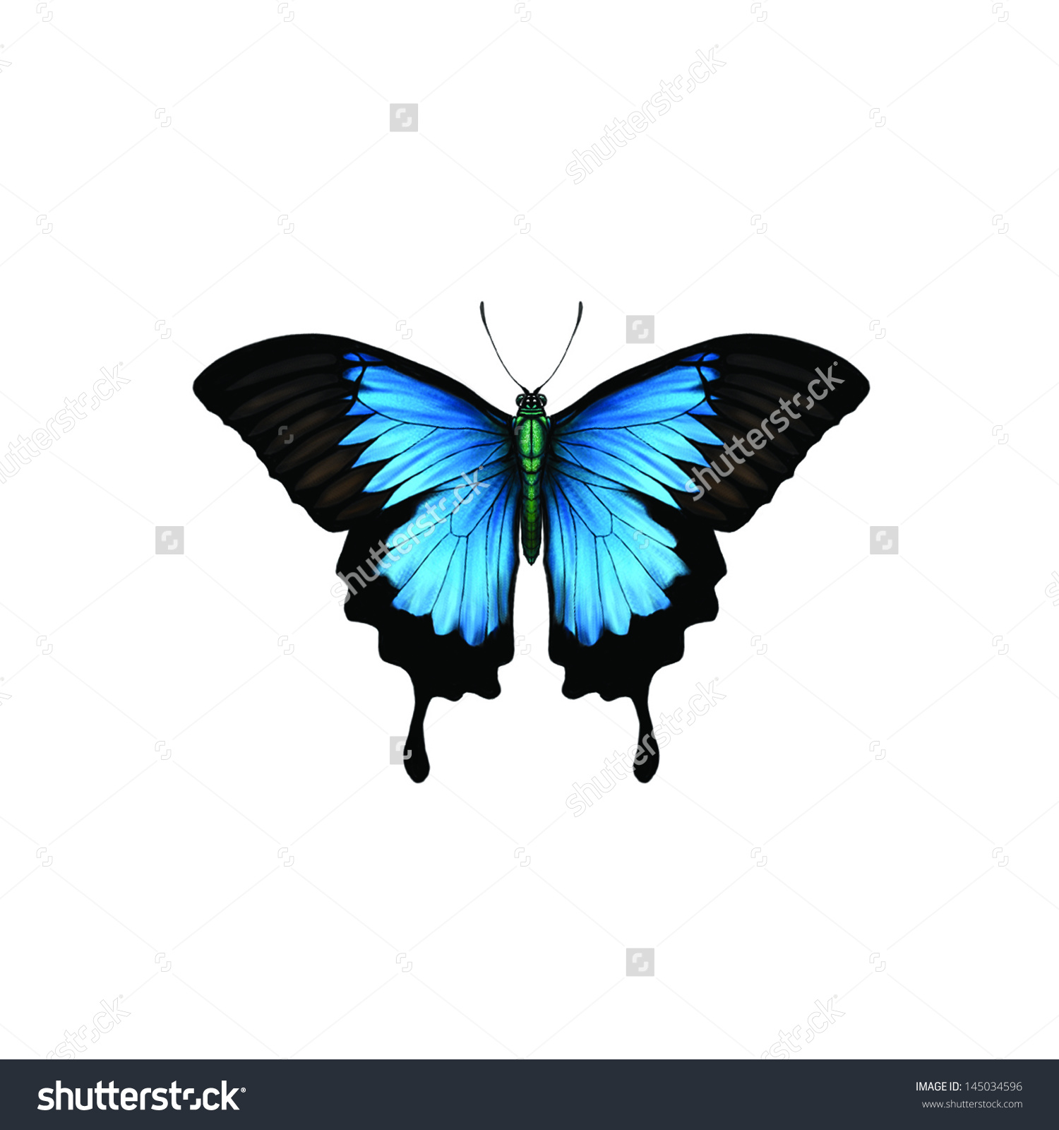 Ulysses Butterfly clipart #4, Download drawings
