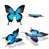 Ulysses Butterfly clipart #12, Download drawings