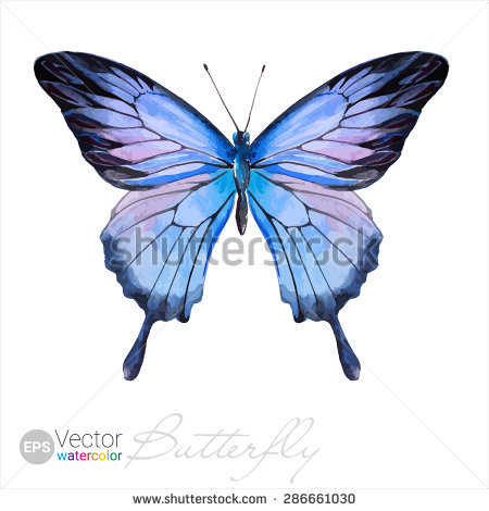 Ulysses Butterfly clipart #5, Download drawings