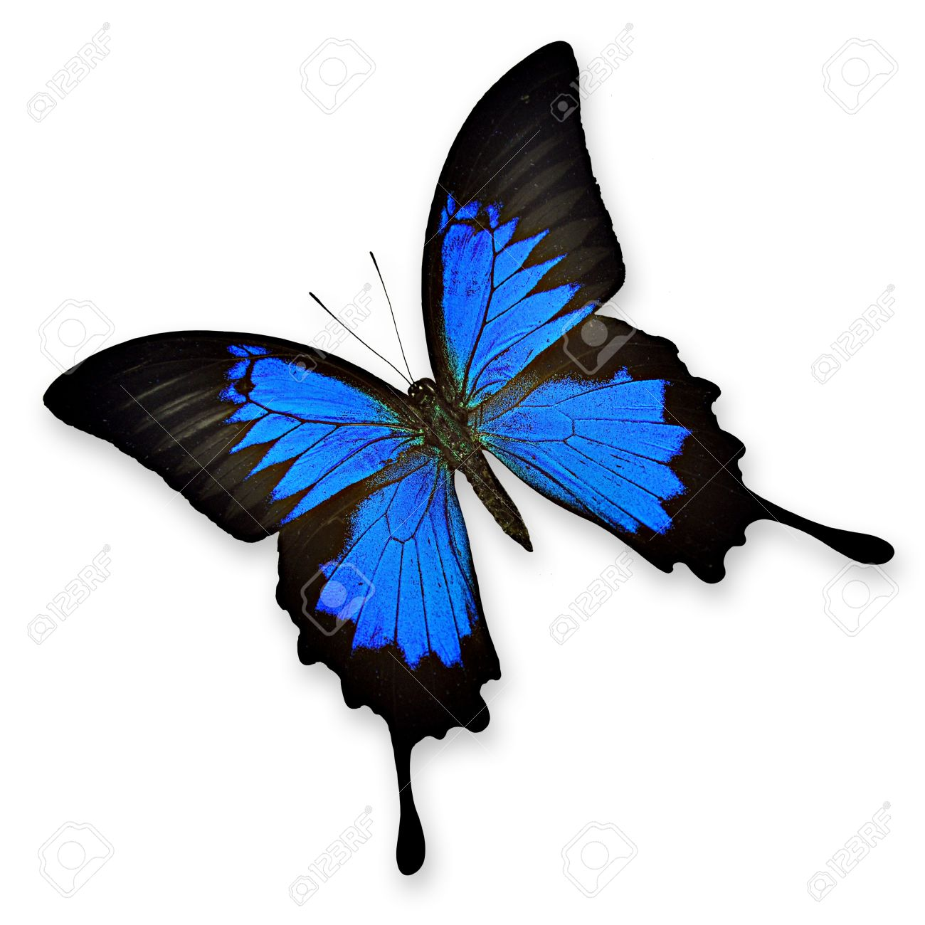 Ulysses Butterfly clipart #18, Download drawings