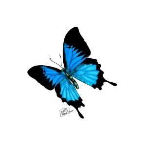 Ulysses Butterfly clipart #19, Download drawings
