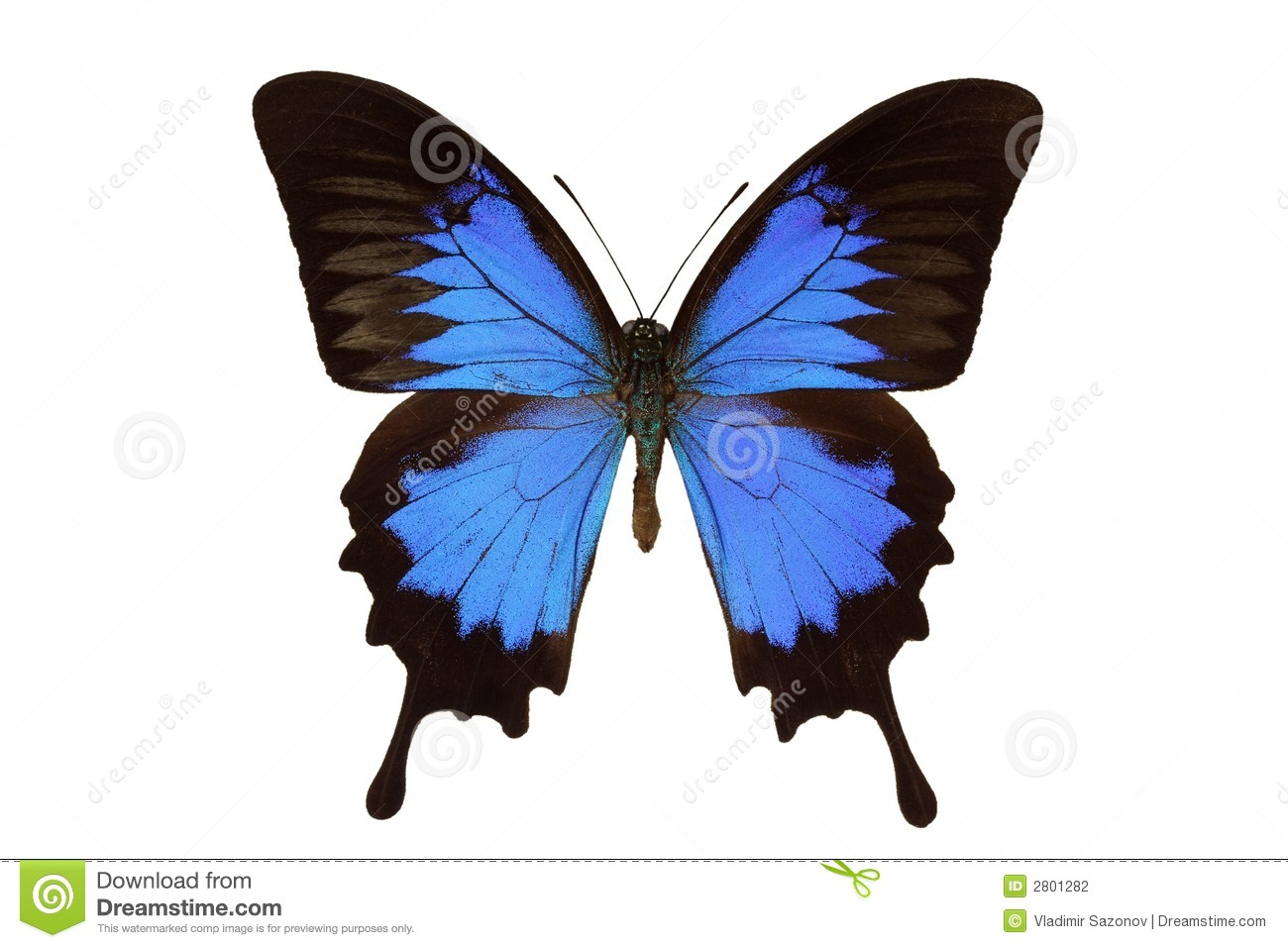 Ulysses Butterfly clipart #17, Download drawings