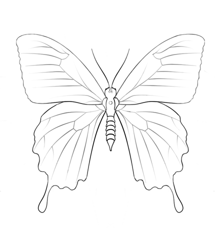 Ulysses Butterfly coloring #11, Download drawings