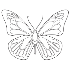 Ulysses Butterfly coloring #2, Download drawings