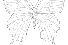 Ulysses Butterfly coloring #14, Download drawings