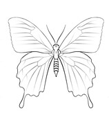 Ulysses Butterfly coloring #9, Download drawings
