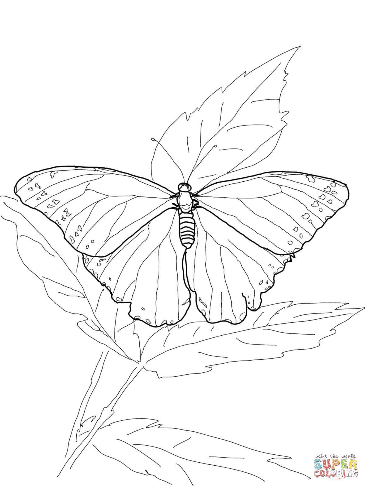 Ulysses Butterfly coloring #1, Download drawings